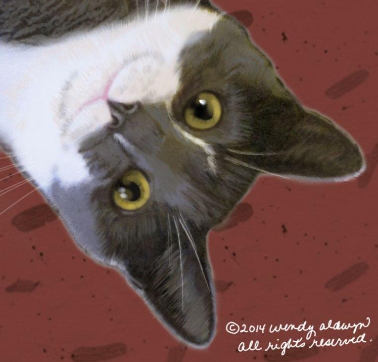 Cat-staring-eyes-800