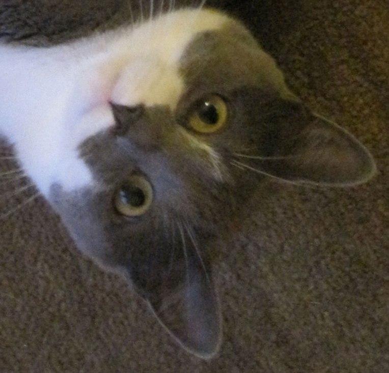 Cat-staring-eyes